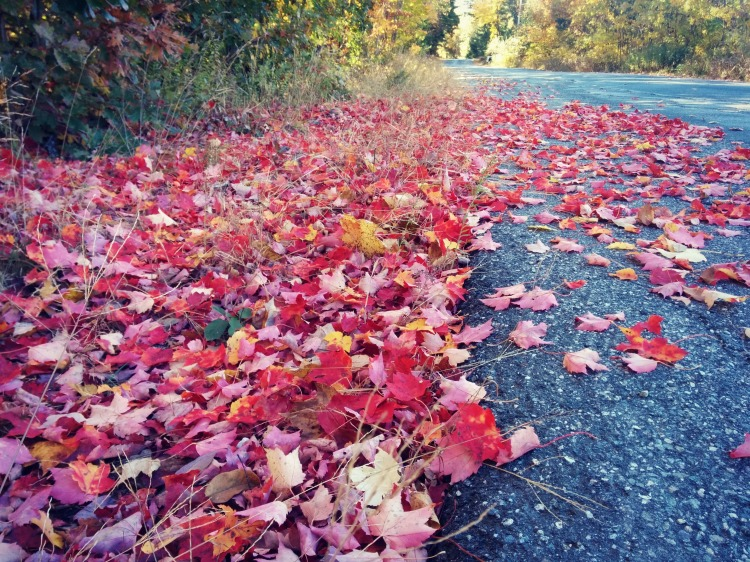 feuillesmortes